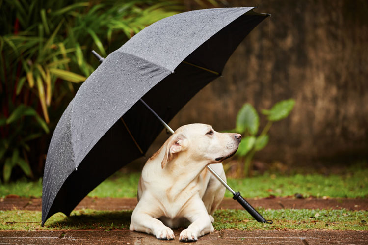 Rainy spring weather mosquitoes heartworm disease