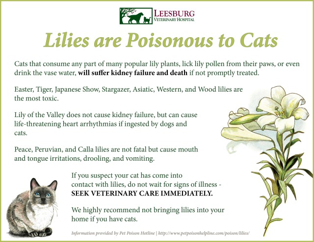 Easter Lilies Are Poisonous To Cats