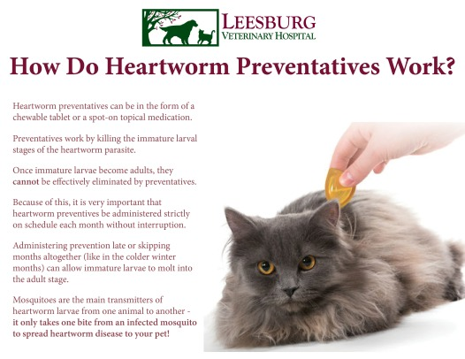 Heartworm Prevention