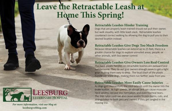 Retractable Leash Dangers