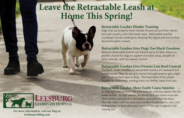 Retractable Leash Dangers