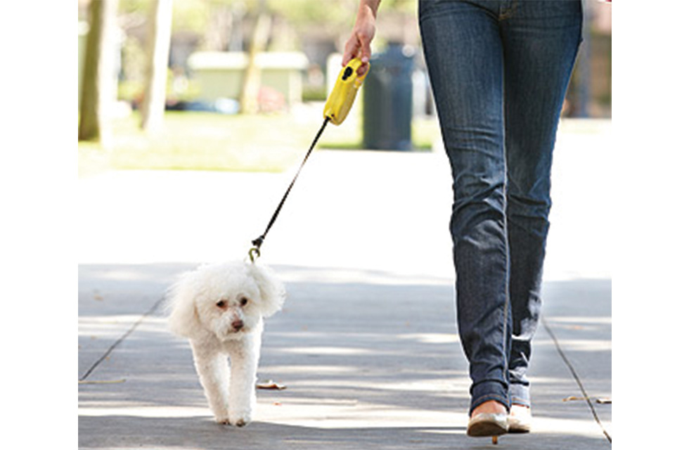 Walking dog retractable leash