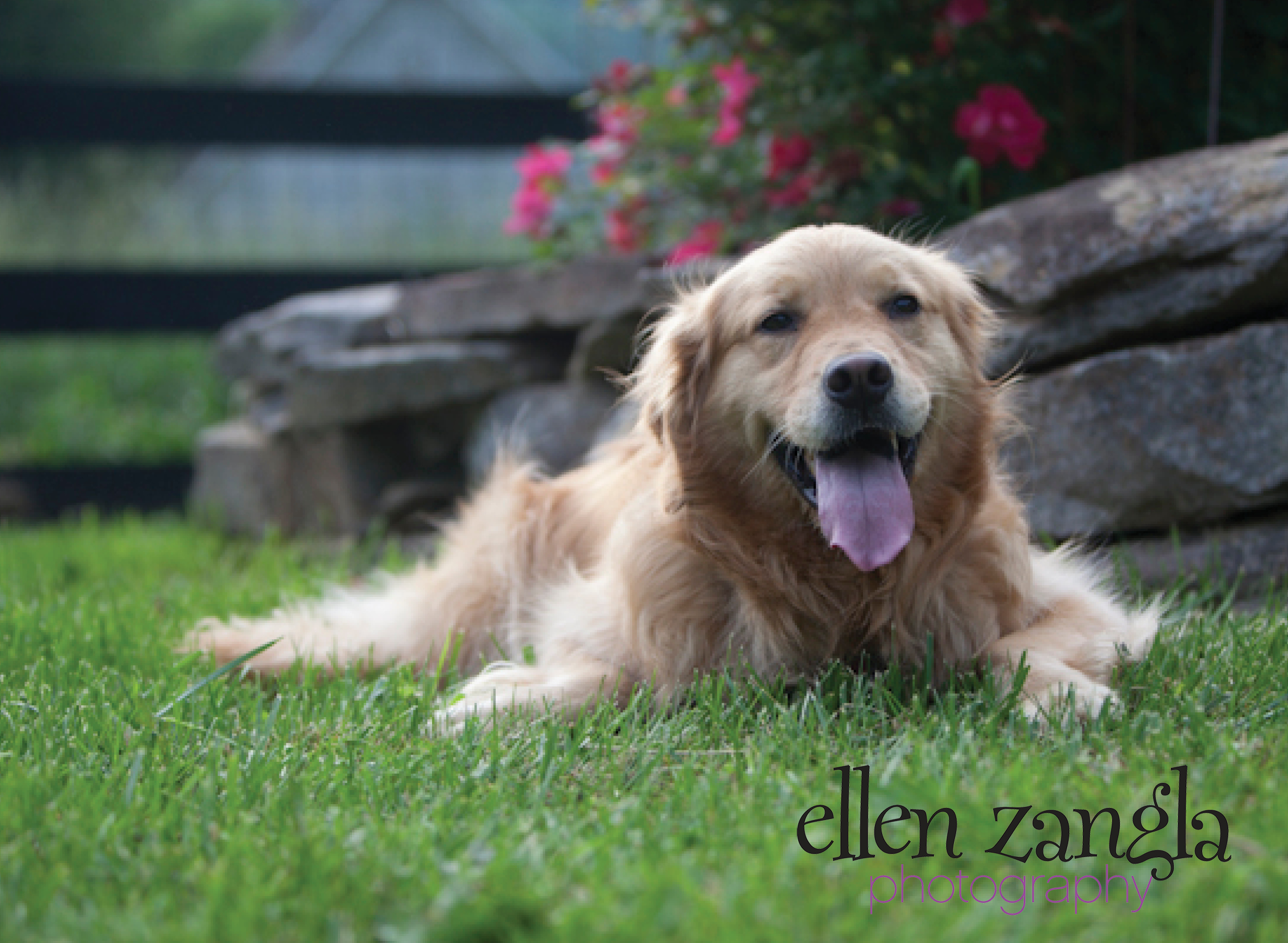 Seasonal Pet Allergies - Ellen Zangla Photography