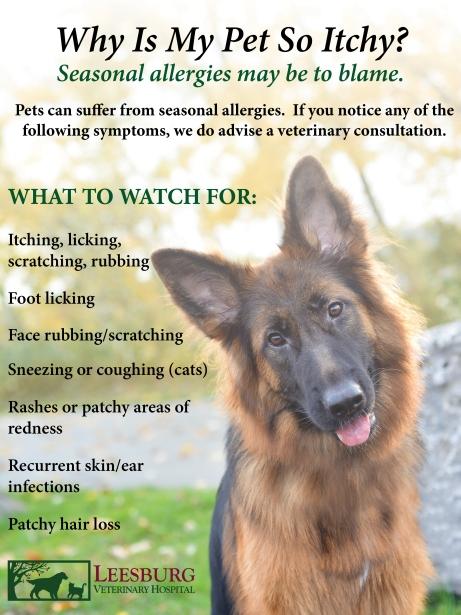Why is my pet so itchy. Seasonal pet allergies