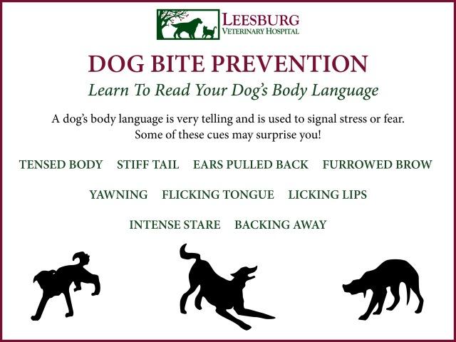 Dog Bite Prevention - Dog Body Language - Leesburg Vet