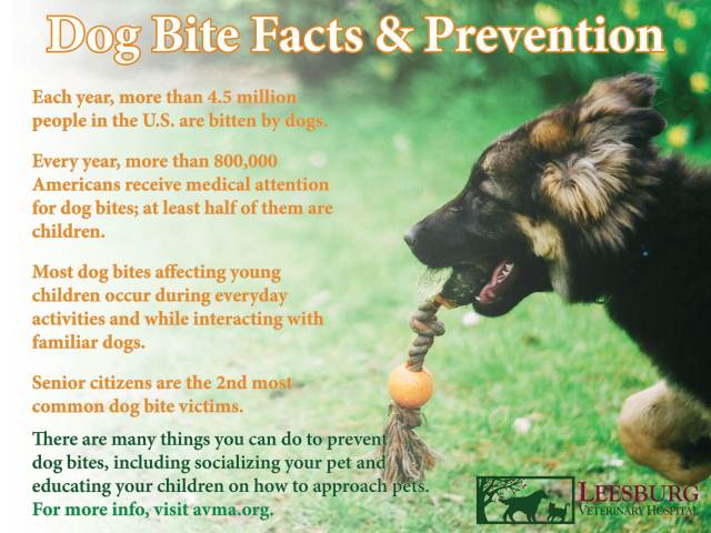 Dog Bite Prevention - Leesburg Vet