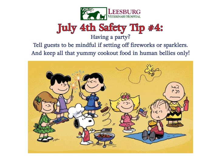 July 4th Pet Safety Tips - Fireworks, Explosives