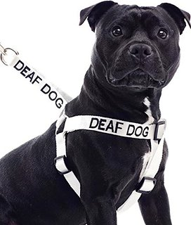 Deaf Dog Awareness
