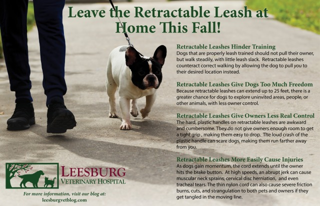 Dangers of Retractable Leashes Walk your dog week