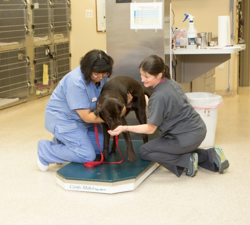 Compassionate animal care -Leesburg Veterinary Hospital