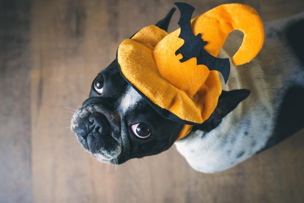Halloween Pet Safety Leesburg Veterinary Hospital
