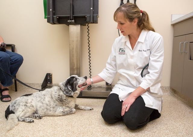 Pet Diabetes Month - Leesburg Veterinary Hospital