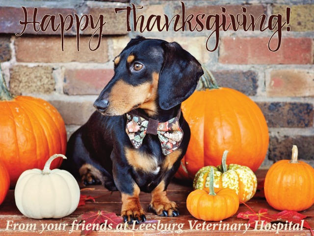 Thanksgiving 2016 Leesburg Veterinary Hospital