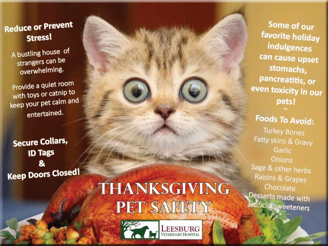 Thanksgiving Pet Safety - Leesburg Veterinary Hospital