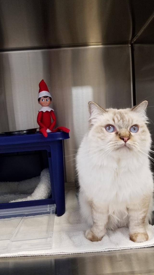 Elf on the Shelf Leesburg Veterinary Hospital