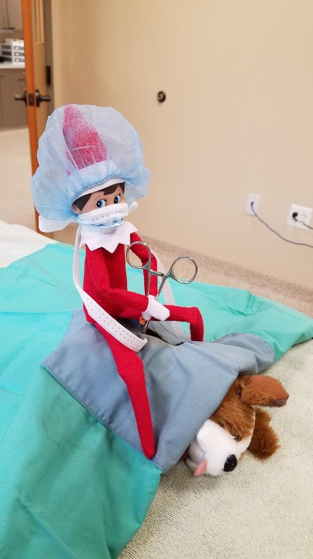 Elf on the Shelf pets Leesburg Veterinary Hospital