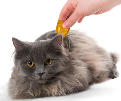 Applying topical preventatives pets - Leesburg Veterinary Hospital
