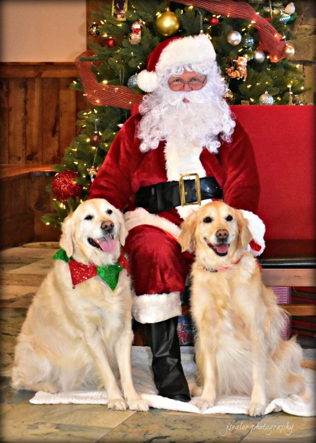 Pictures with Santa 2016 - Leesburg Veterinary Hospital