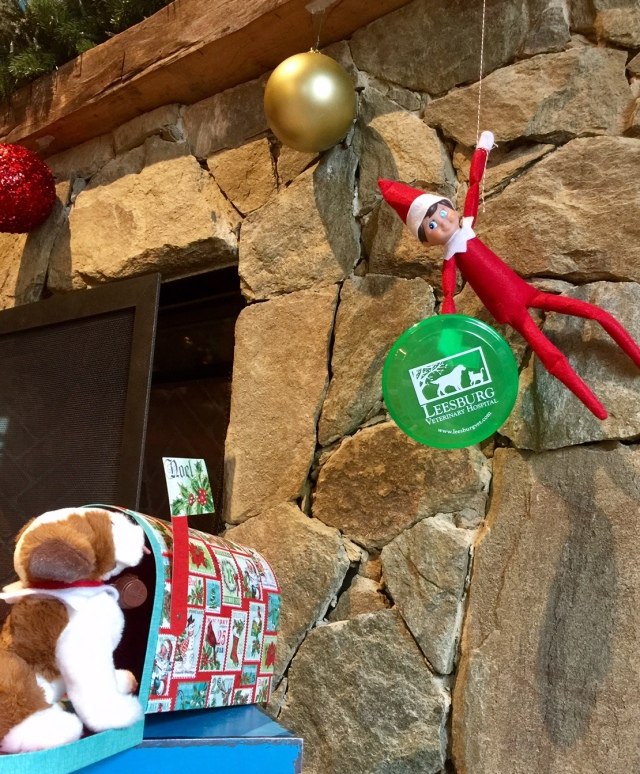Elf on the Shelf - Leesburg Veterinary Hospital