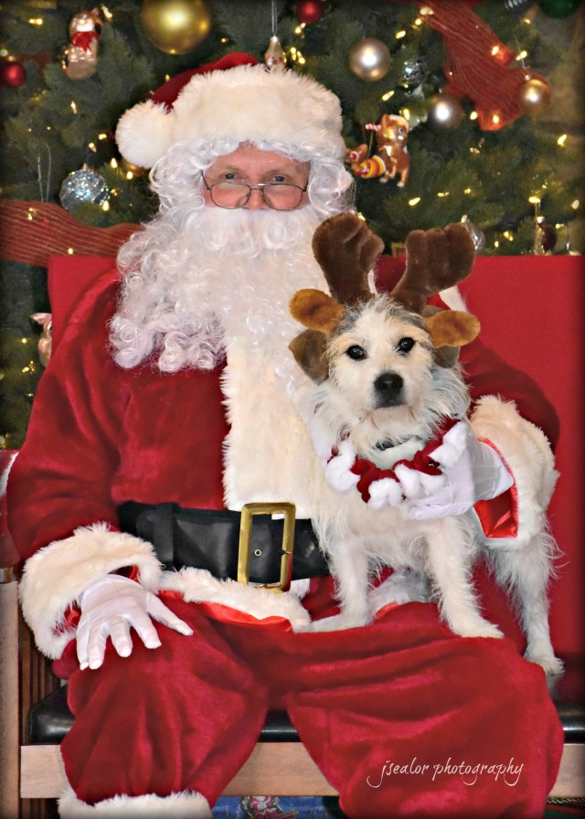 Pictures with Santa Leesburg Veterinary Hospital