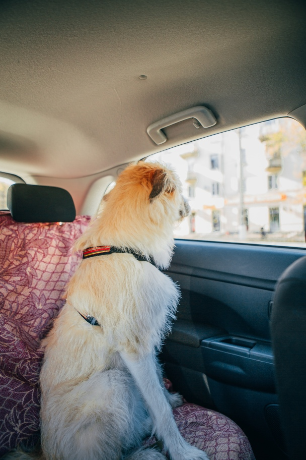 Fear Free Pet Travel Tips