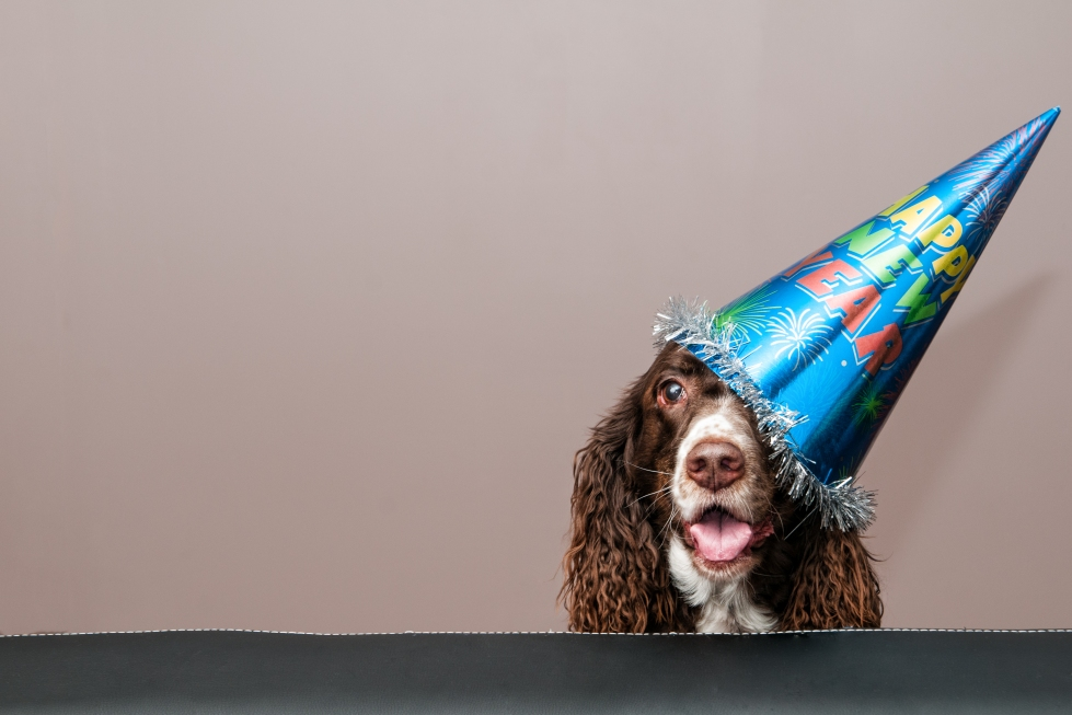 2017 New Year's Resolutions for Pets - Leesburg Veterinary Hospital