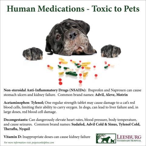 Always keep medications safely out of reach and never administer a medication to a pet without first consulting your veterinarian. nearly 50% of all pet poisonings involve human drugs. Pets metabolize medications very differently from people. Even seemingly benign over-the-counter or herbal medications may cause serious poisoning in pets. If your pet has ingested a human over-the-counter or prescription medication, please call us immediately.