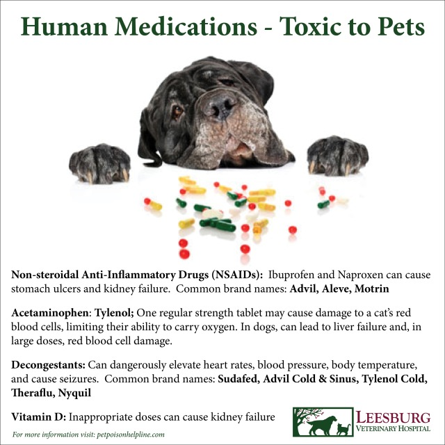 Human Medications Toxic to Pets Dogs