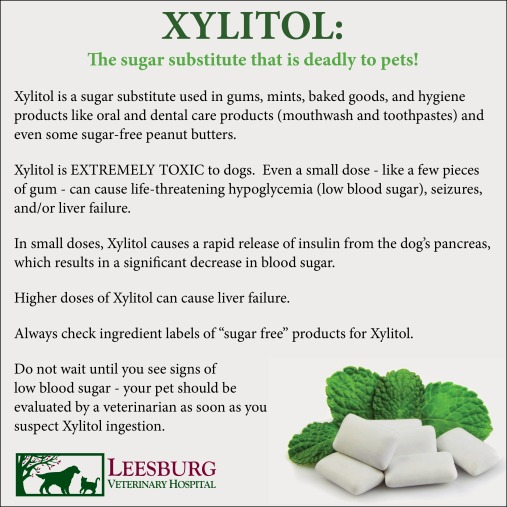 Xylitol sugar substitute toxic to dogs