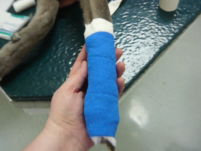 Pet First Aid - How to Apply a Bandage