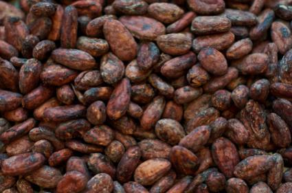 Cocoa Bean Mulch Pet Garden Safety