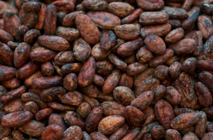 Criollo Cocoa Pod in addition Dumping Beans furthermore Cocoa Bean Mulch likewise  further Chocolate Bar B. on how are cocoa beans made