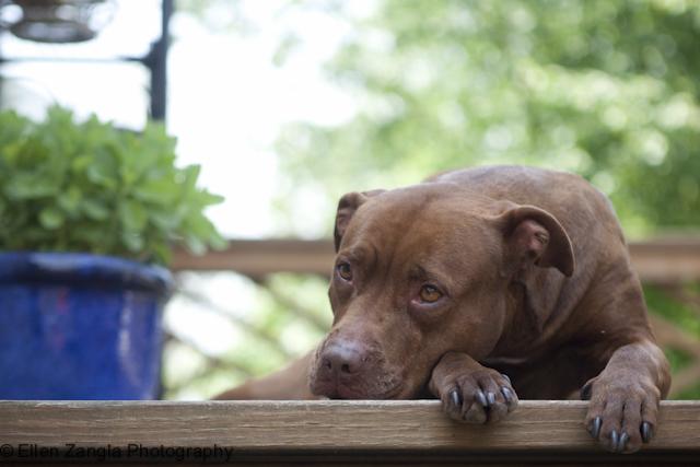 Pet Garden Safety