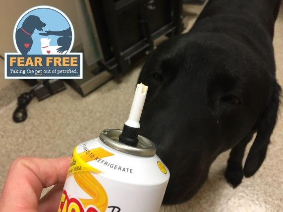 Fear Free Vet Visits - Leesburg Veterinary Hospital
