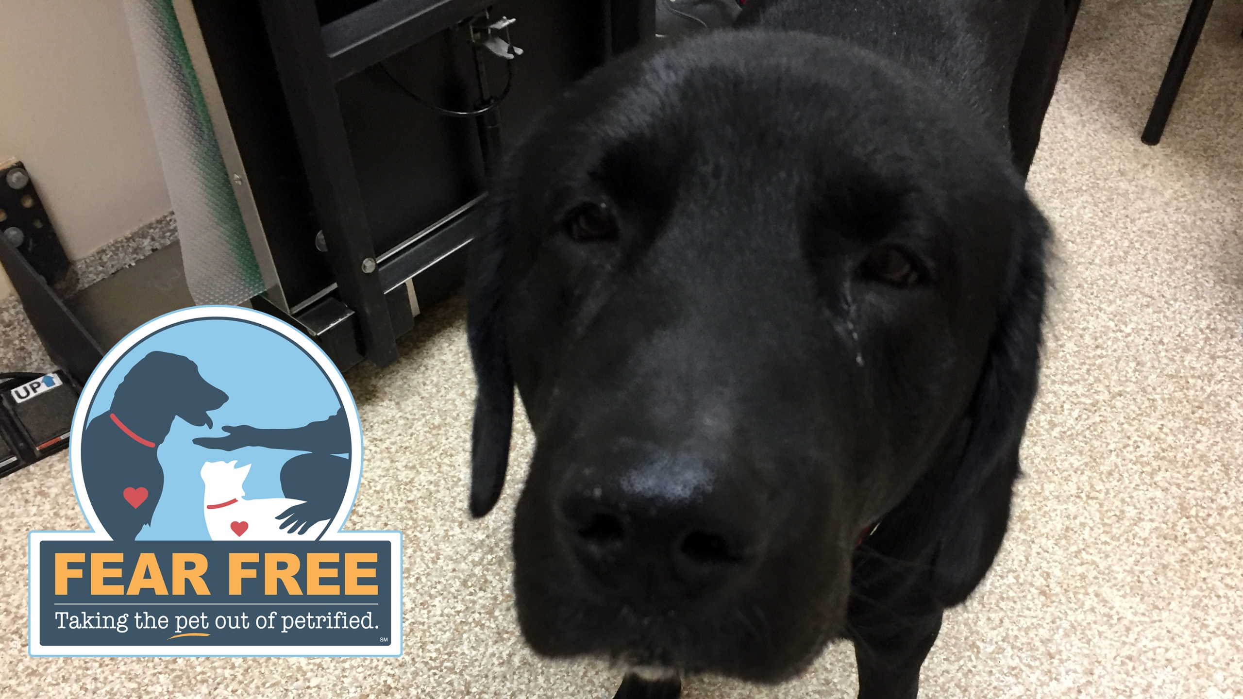 Fear Free Vet Visits - Leesburg Veterinary Hospital