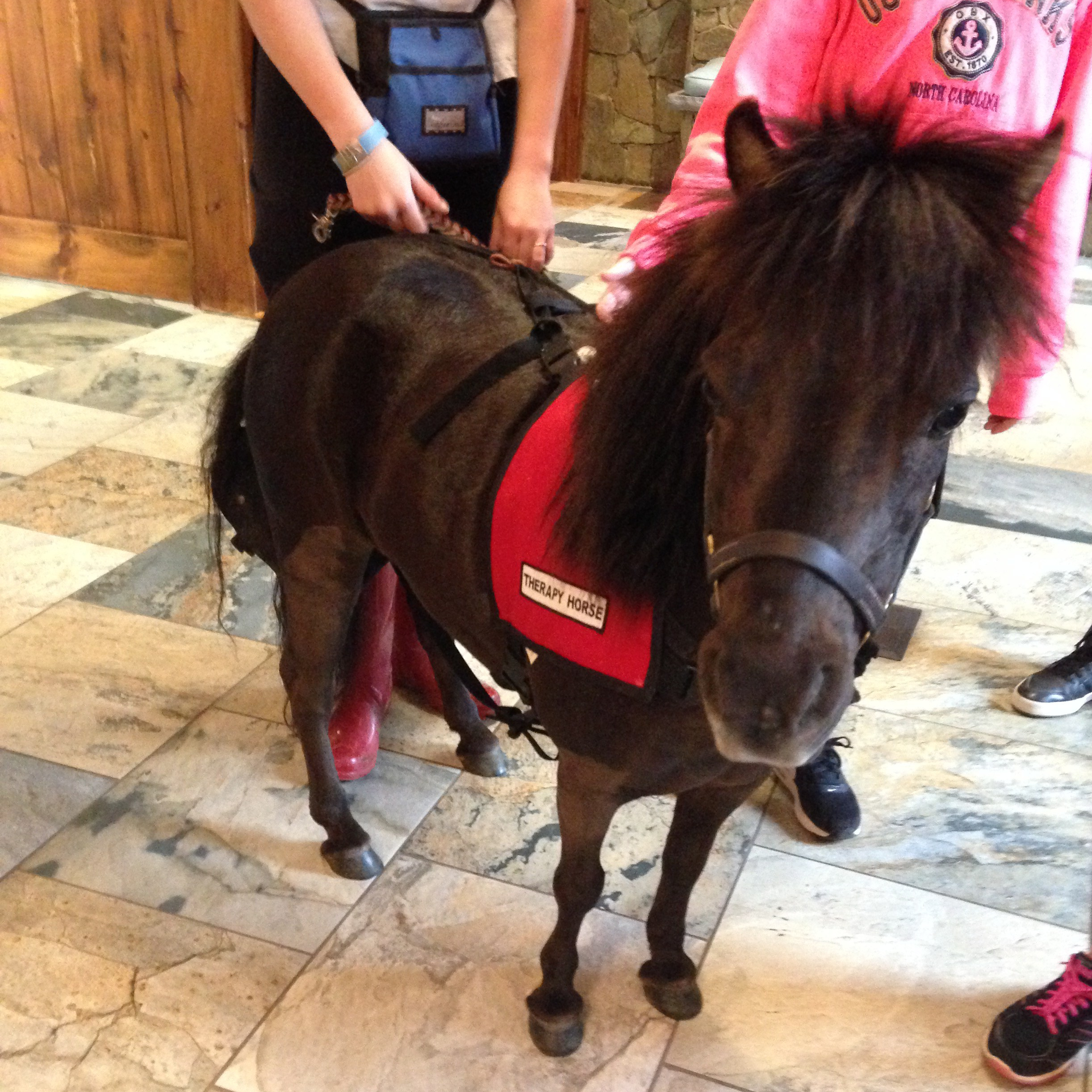 Penelope the Therapy Pony