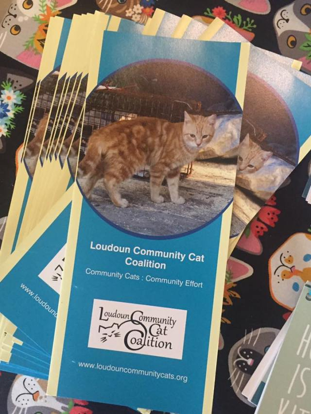 Loudoun Community Cat Coalition Fundraiser Ellen Zangla Photography Leesburg Veterinary Hospital