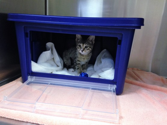 Cat Friendly Practice - Leesburg Veterinary Hospital Hideaway Box
