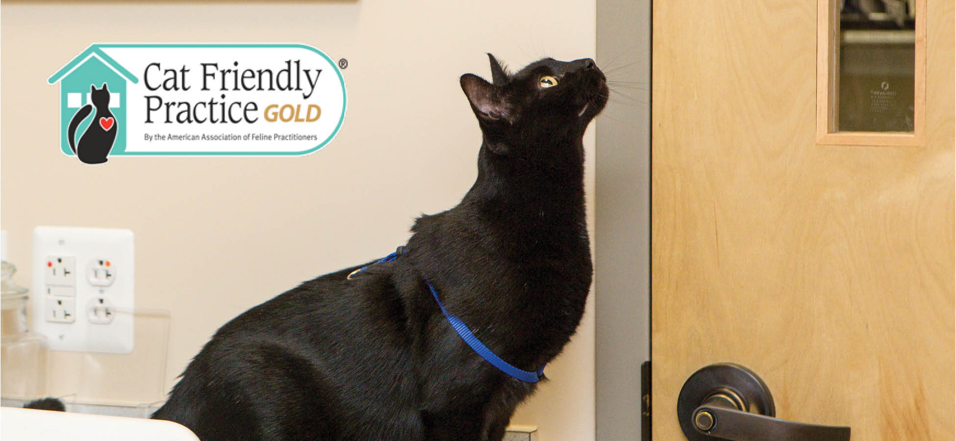 Leesburg Veterinary Hospital - Cat Friendly Practice - Healthy Cat Month