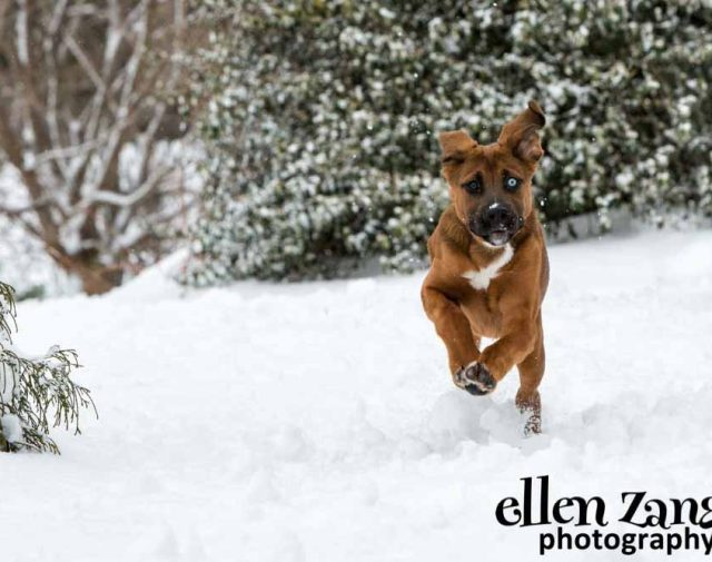 Ellen Zangla Pet Photography