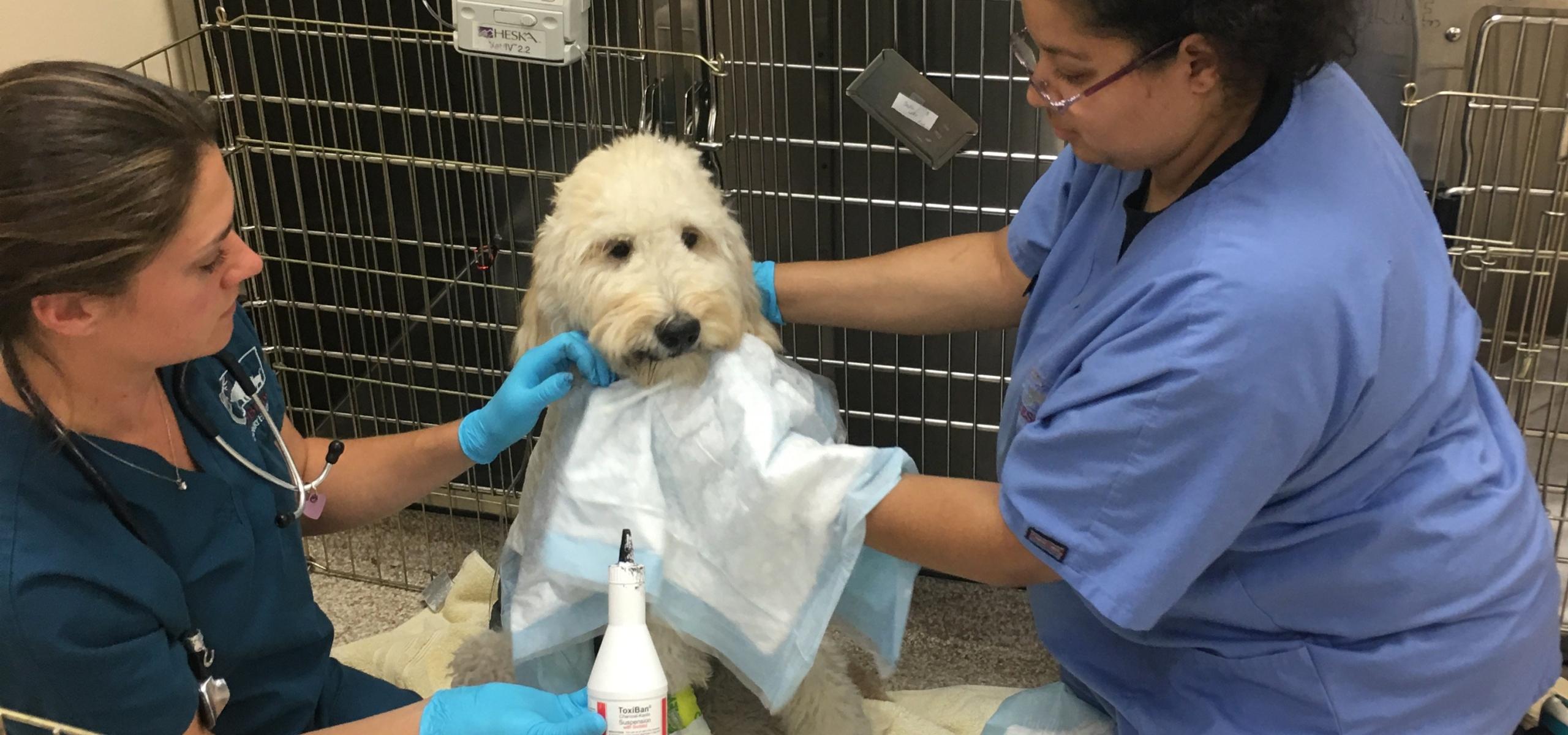 Treating medication poisoning in dogs - Leesburg Veterinary Hospital